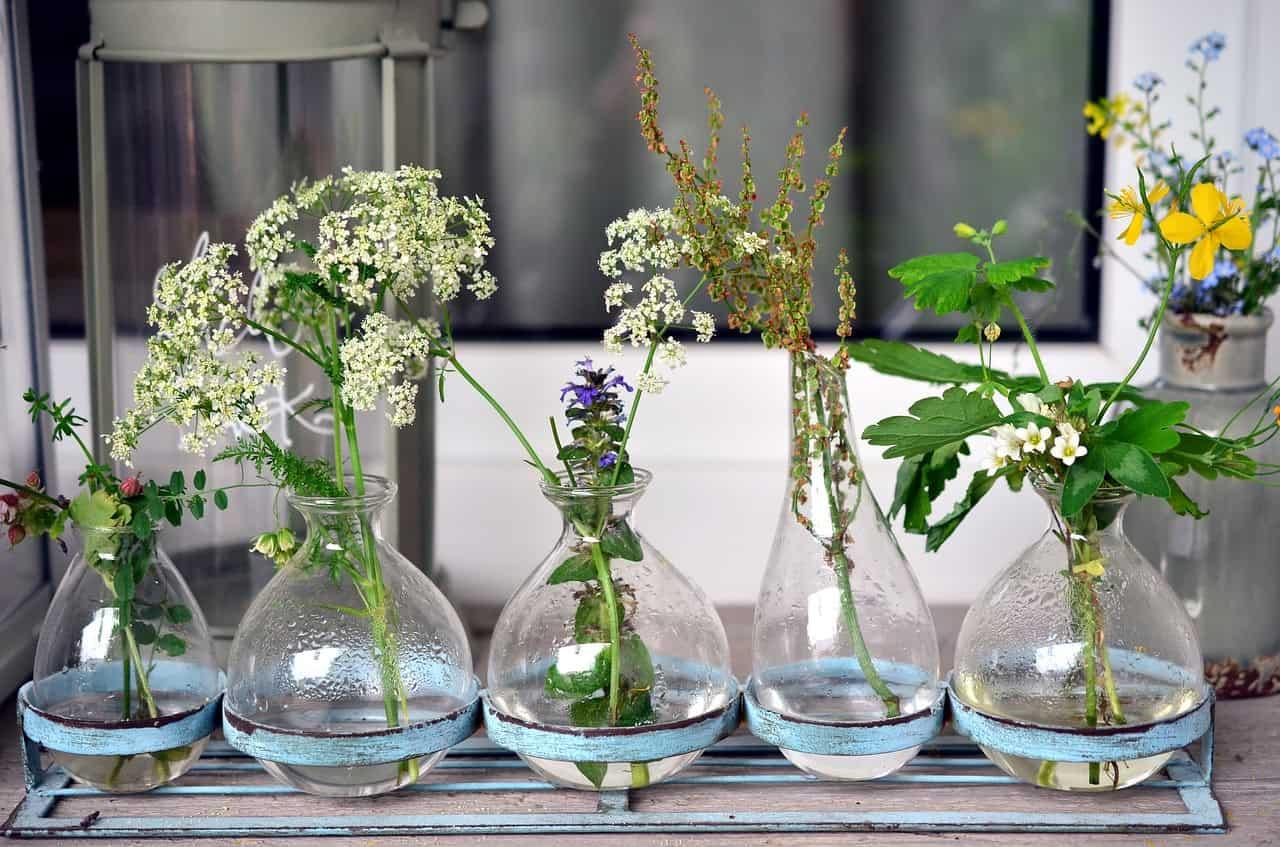 Arredare la tua casa o il tuo giardino con le piante acquatiche
