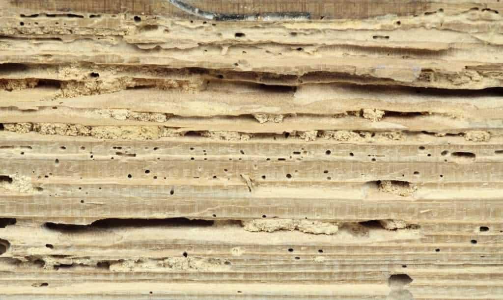 Tarli e tarme del legno: ecco i rimedi