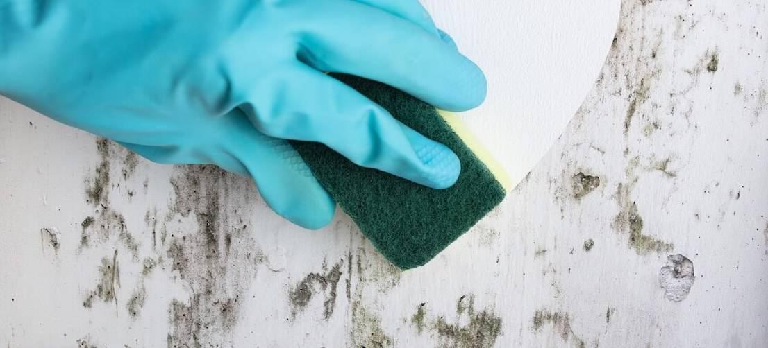 Come eliminare la muffa dai muri