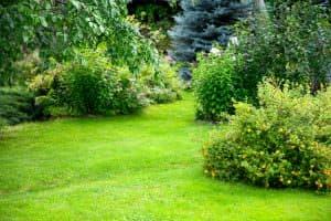 Alberi sempreverdi nel giardino di casa: come scegliere?