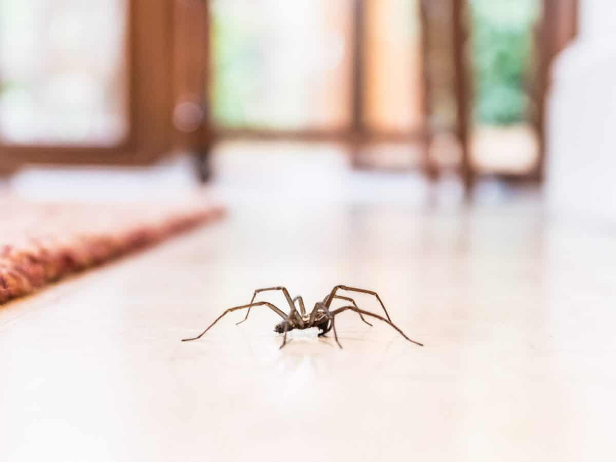 rimedi ragni in casa