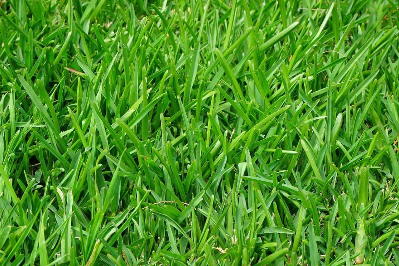 eliminare erbe infestanti