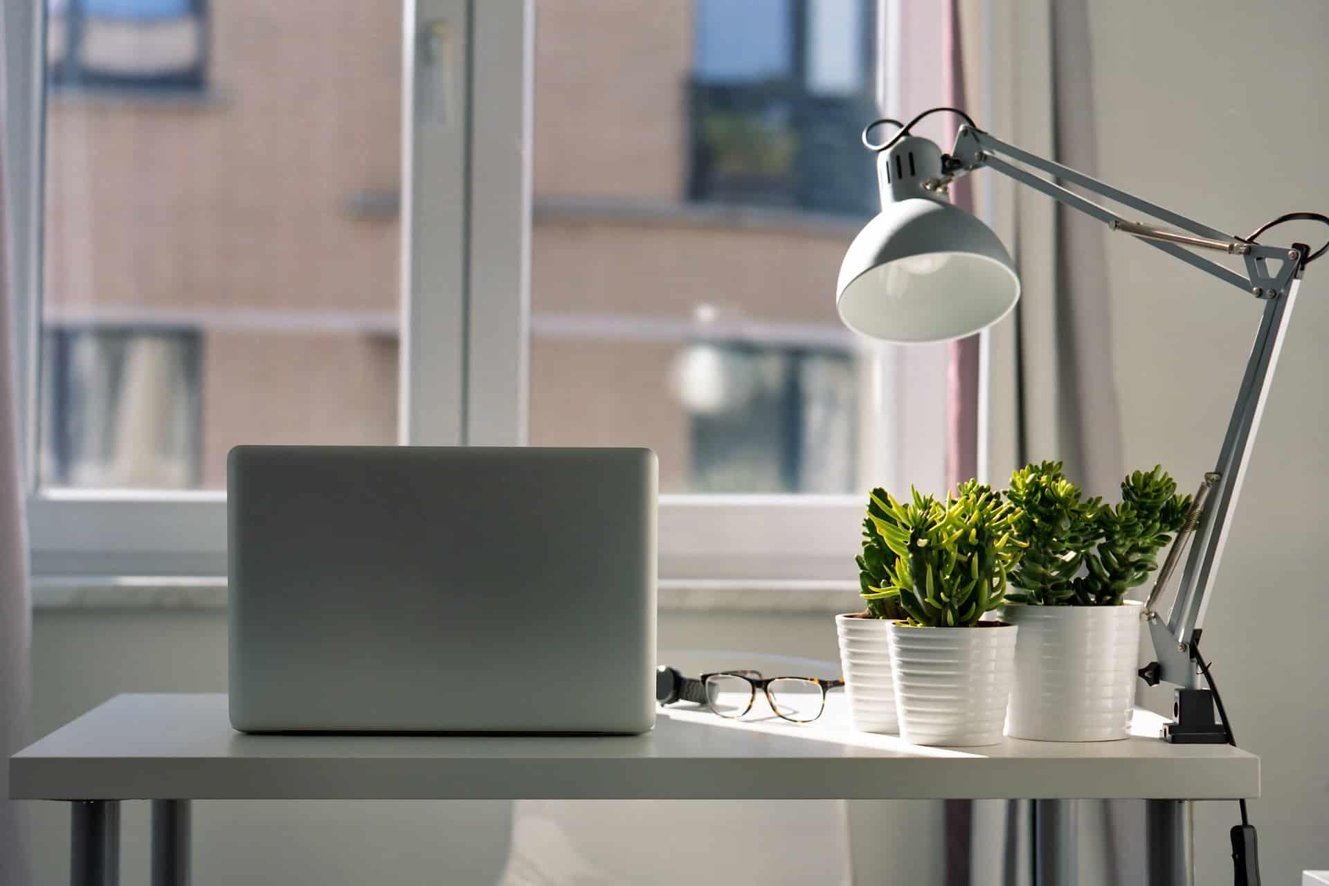 piante che purificano l'aria in ufficio