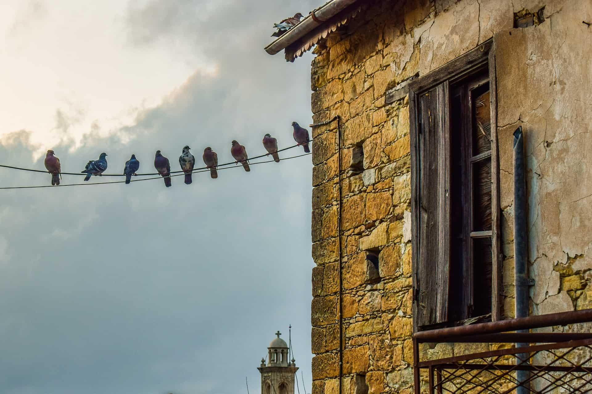 come allontanare i piccioni dal balcone