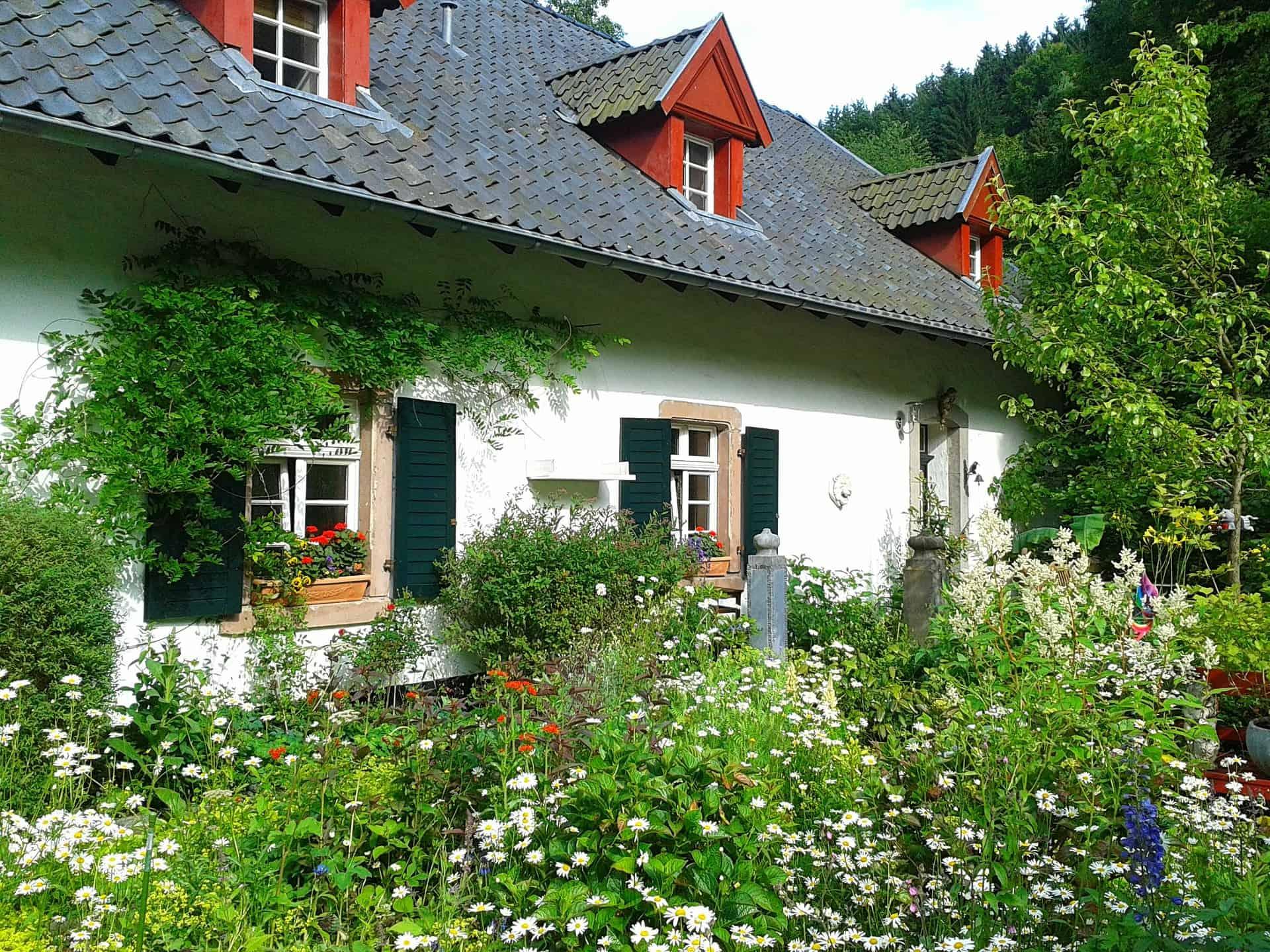 fiori per la casa da piantare in primavera