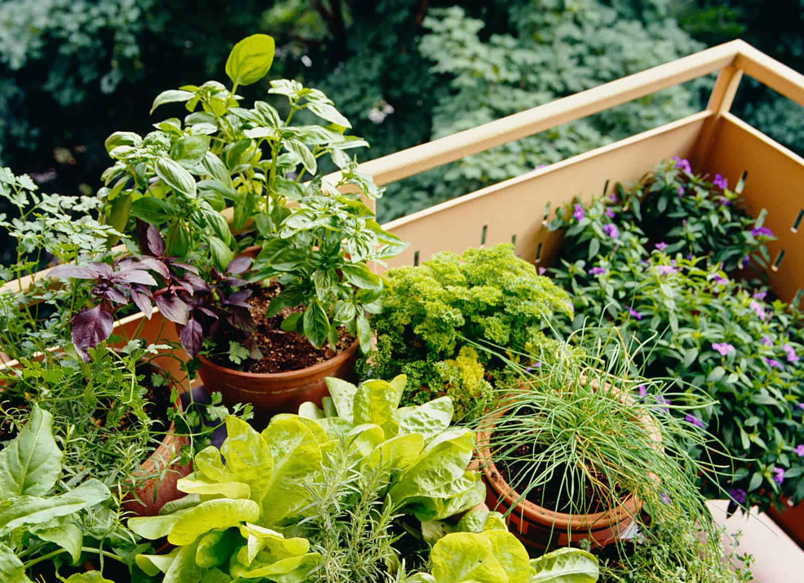 piante cucina